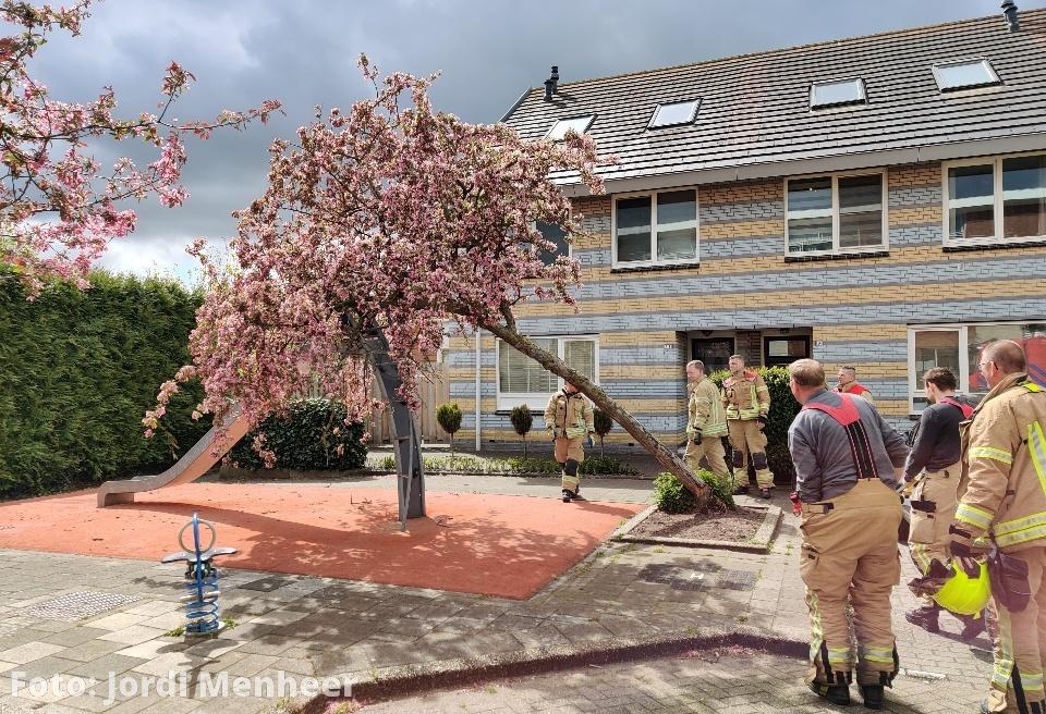 Boom omgewaaid op glijbaan aan de Ariahof, brandweer heeft situatie veiliggesteld