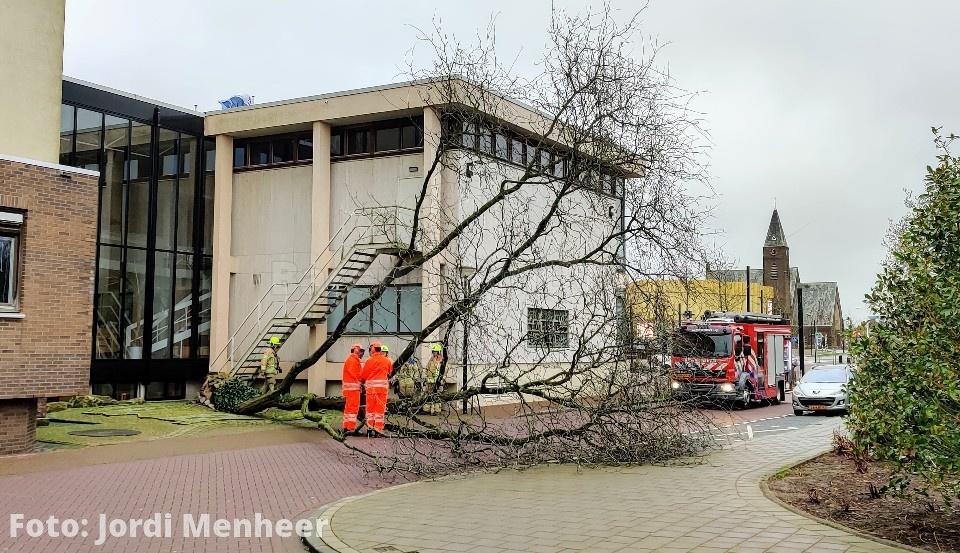 Rijnstraat: Flinke boom naast het gemeentehuis omgewaaid, de boom wordt in stukjes gezaagd