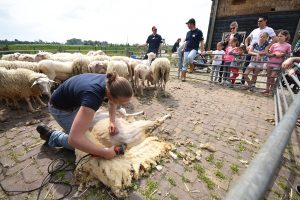 Dag van de wol bij De Kleine Duiker