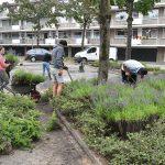 Omwonenden Oude Haven herplanten samen het groen van de voormalige Efteling rotonde