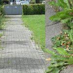 Boete voor onkruidbestrijder vanwege gebrekkig groenonderhoud in Barendrecht