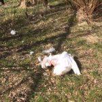 Politie zoekt eigenaar van hond die zwaan dood beet in Riederpark