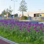 Operatie Steenbreek: 'minder tegels, meer groen', waar moet de gemeente groener worden?