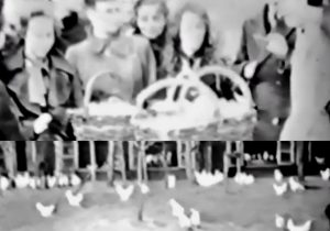 Video uit 1939: Kippen en eieren in Barendrecht