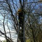 Brandweer redt kat uit boom aan de Achterzeedijk in Barendrecht