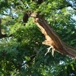 Afgebroken tak boom
