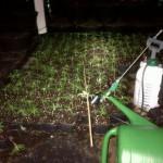 419 hennepplanten in woning aan het Scharwater in Barendrecht (Carnisselande)