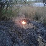 Brandje in rietkraag langs de Oude Maas (Achterzeedijk, Barendrecht)