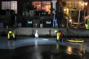 Brandweer haalt zwaan van ijs aan Touwslagerij om visdraad van lichaam te halen