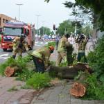 Brandweer zaagt delen van de kastanjeboom in stukjes nadat een vrachtwagen tegen de boom aan reed (1e Barendrechtseweg, Barendrecht)