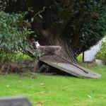 Grafschennis begraafplaats Barendrecht in Opsporing Verzocht