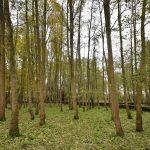 Archieffoto: Bomen in Park Buitenoord