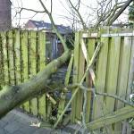 Stevige boom valt dwars door schutting aan de Ratelaar in Barendrecht