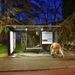 Stormschades: Boom valt op bushokje aan de Binnenlandse Baan in Barendrecht
