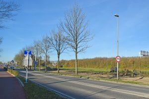 GroenLinks stelt vragen ver het kappen van 50 bomen langs Dierensteinweg