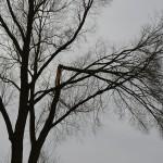 Kleine schadegevallen door stormachtig weer in Barendrecht