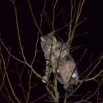 Brandweer helpt bange kat twee keer uit boom aan de Mahoniehout in Barendrecht