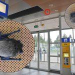 Vleermuizen boven je hoofd bij ingang station Barendrecht