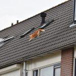 Kat valt van dak in de Polkastraat, heeft nog 8 levens over
