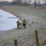 Schaap in ijskoud water aan de Middeldijk in Barendrecht