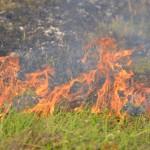 Grasbrandje langs de A29 aan de Middeldijk thv IKEA Barendrecht