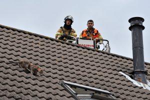 Brandweer nodig om kat van dak aan de Torenmolen te krijgen