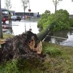 Storm: Omgewaaide bomen blokkeren Middelweg in Barendrecht