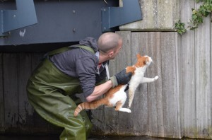 Brandweer helpt kat onder brug vandaan aan het Kreeftwater in Barendrecht (Carnisselande)