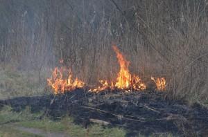 Natuurbrandje aan de Achterzeedijk in Barendrecht
