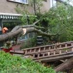 Omgewaaide boom veroorzaakt schade aan woningen Biezen, Barendrecht