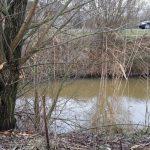"""Sporen van Bevers ontdekt in de Koedood: """"Kroon op werk klimaatbuffer"""""""
