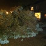 Stormschade Barendrecht blijft beperkt tot omgewaaide bomen (Windsingel/'t Fruit en van Hogendorpsingel)