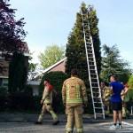 Brandweer assisteert bij weghalen grote zwerm bijen aan de Kempenaar in Barendrecht