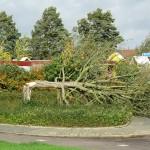 Stormschade Barendrecht: Voornamelijk bomen het slachtoffer