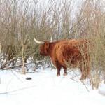 Sluit het jaar af met een struintocht langs de Koedood (Barendrecht/Rhoon)