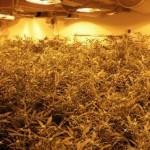 52-jarige Barendrechter verdachte in onderzoek naar wietplantage