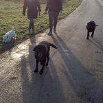 Een aantal loslopende honden in de Zuidpolder
