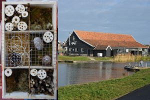 7 en 21 feb: Workshops insectenhotel en goudbloemenzalf maken